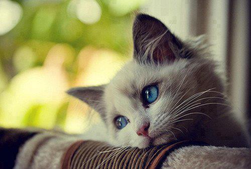 gatito mirada soñadora