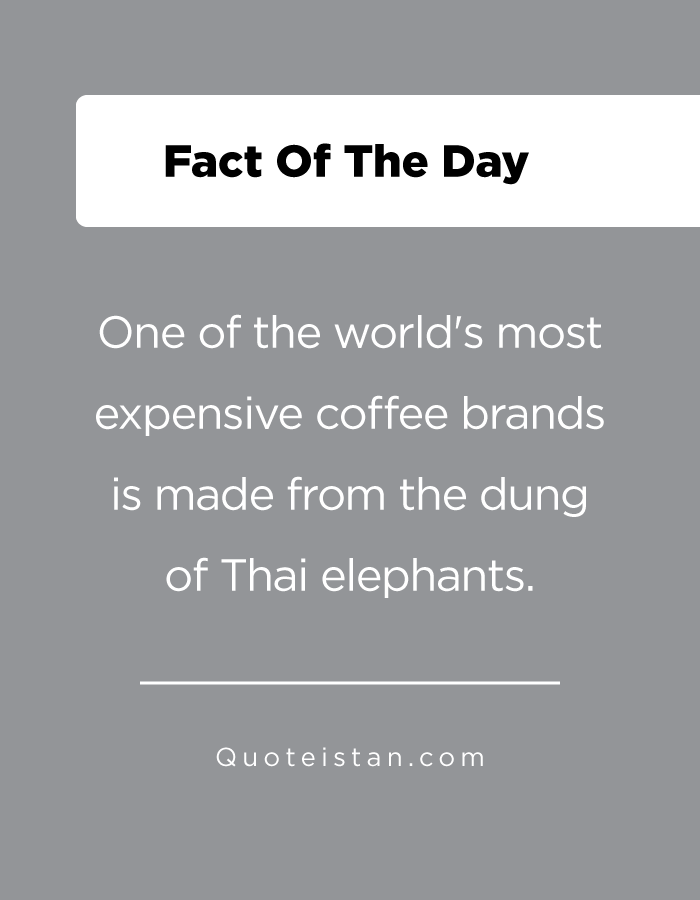 One of the world's most expensive coffee brands is made from the dung of Thai elephants.