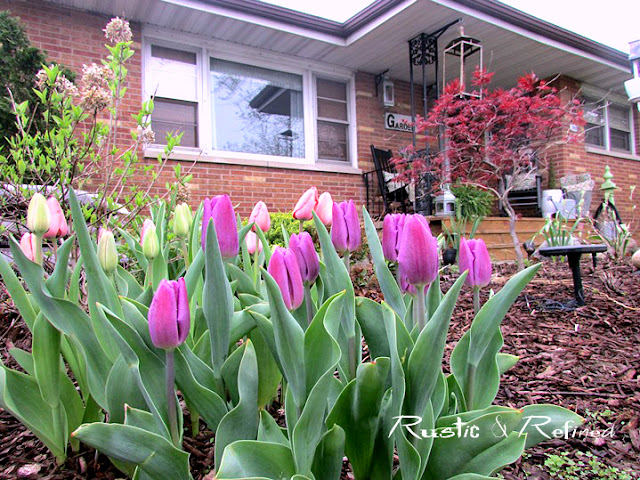 Low maintenance flowers for spring blooms