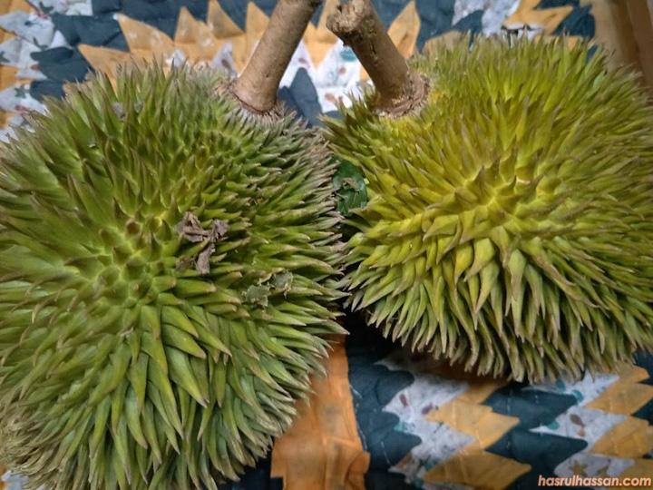Bentuk buah Durian Hutan