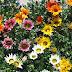 Como Ter Flores no Jardim o Ano Todo? [ Outono ]