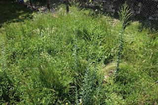 A very overgrown corner of the garden