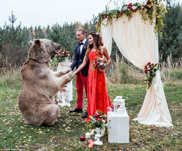 En la boda más extraña, pareja rusa invita a un oso