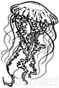 Ubur-ubur, sala satu hewan Coelenterata, Biologi TKD Saintek SBMPTN 2017