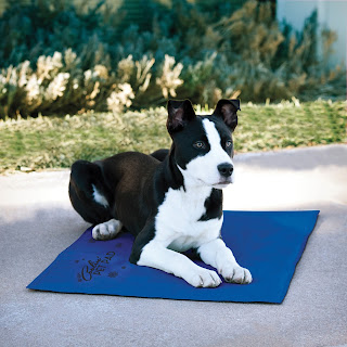 tapis pmour chien