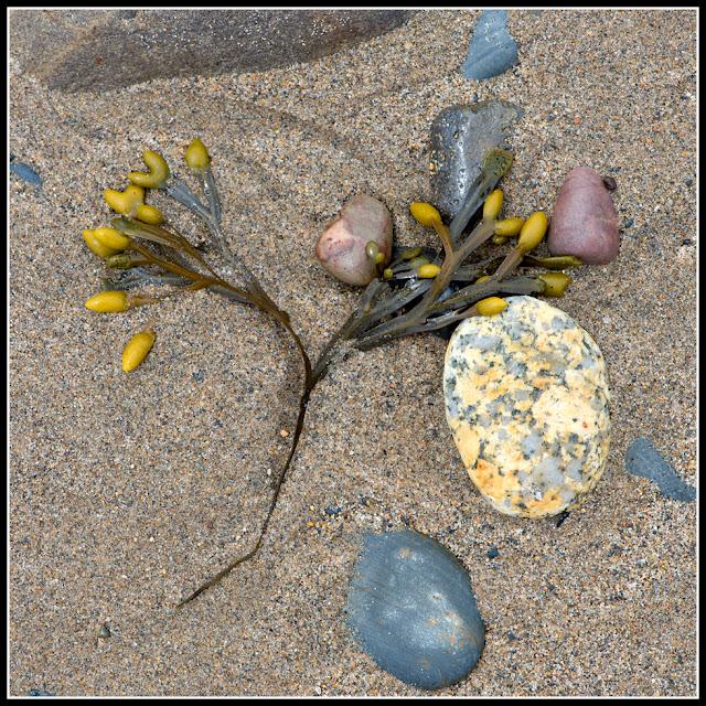 Nova Scotia; Seaweed; Hirtle's Beach