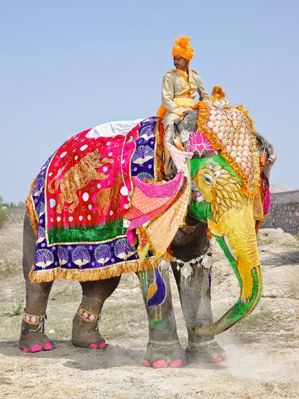 painted indian elephant wallpaper - photo #11