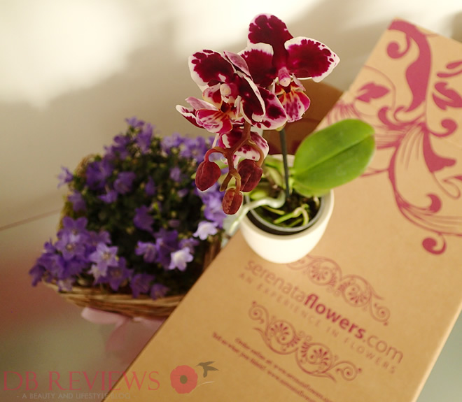 Win with Serenata Flowers