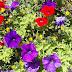 Rode en paarse bloemen achtergrond