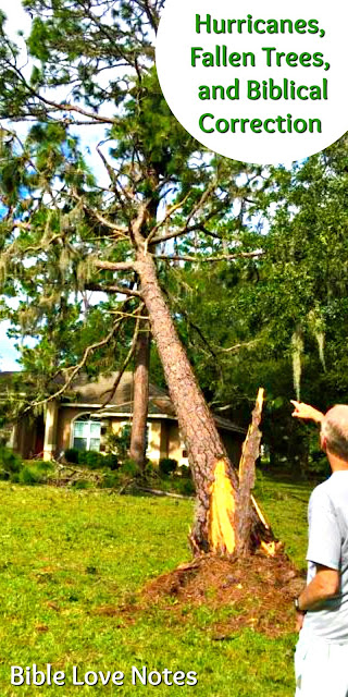 Hurricanes, Fallen Trees, & Biblical Correction
