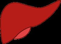 Elimination hépatique foie