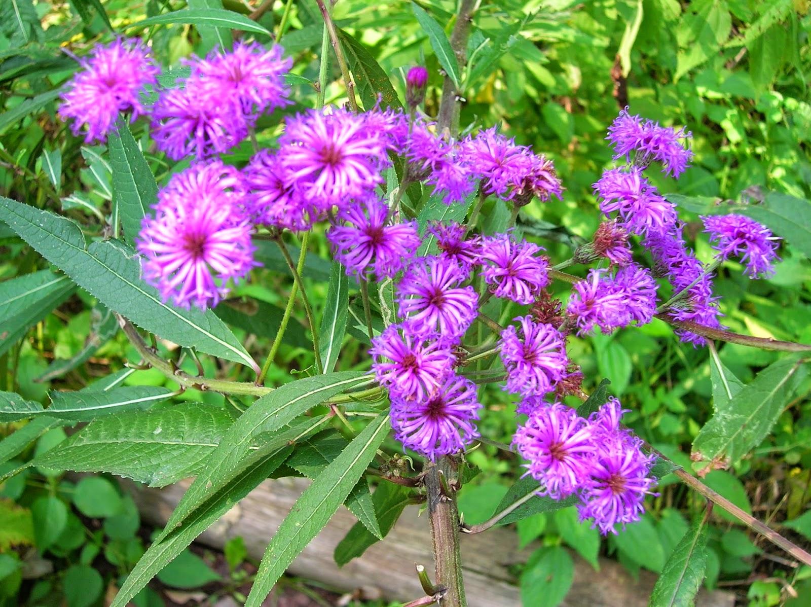 Native Plant Nursery Nj Thenurseries