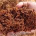 Công dụng tuyệt vời của vỏ dừa đối với ngành nông nghiệp