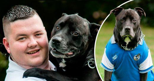 Perro Bull salva a su amigo humano del suicidio