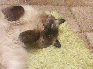 Кот лежащий на полу