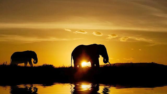 Silhouet van olifanten bij een ondergaande zon