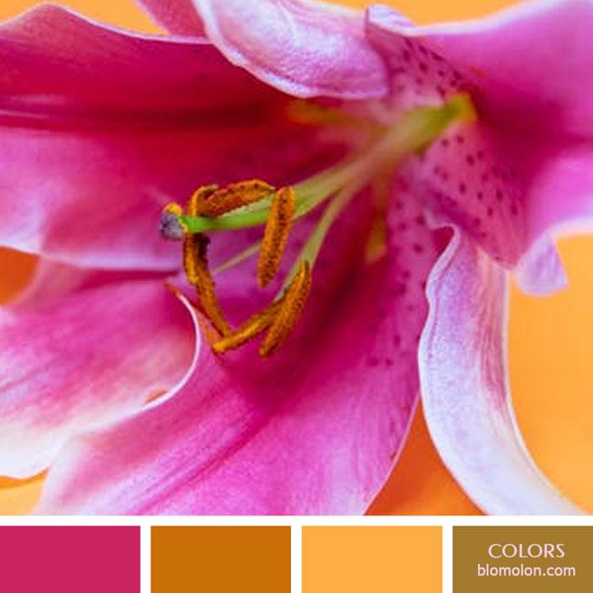variedad_en_color_color_61