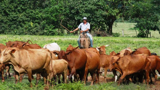 werner-gutierrez-gobierno-arremetera-contra-productores-por-falta-de-alimentos
