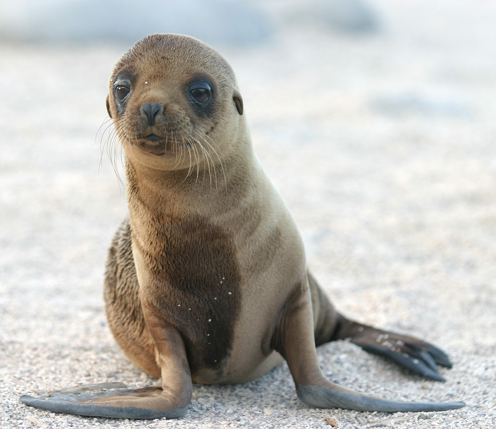 Sea Lion | Facts | Photos