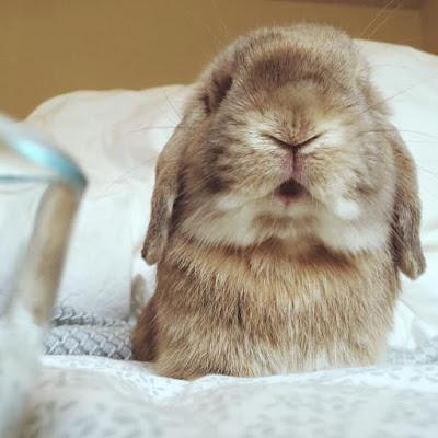 foto de conejo beige tierna