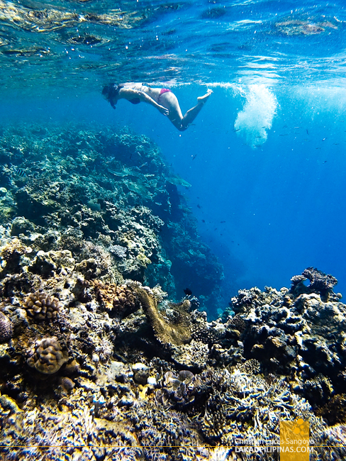 El Nido Island Hopping Tour A C Matinloc Reef