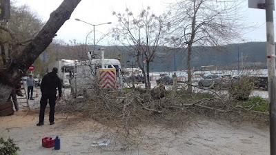 ΗΓΟΥΜΕΝΙΤΣΑ-Έκλεισε ο δρόμος στα Πλατάνια, από πτώση δέντρου