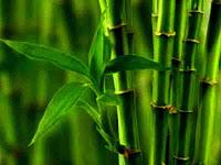 Cerita inspiratif dan motivasi berjudul batang bambu