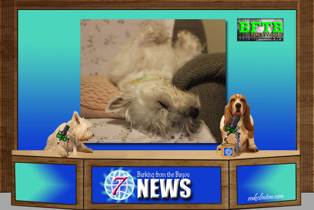 BFTB NETWoof News with backdrop photo of sleeping Westie