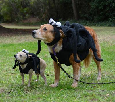 spiderdogs