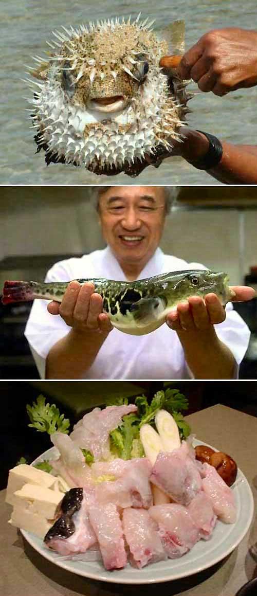 Zuppa ricetta pesce palla fugu for Disegno pesce palla