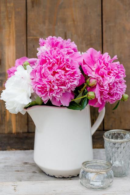 Das Wochenende mit Rosen, Erdbeeren und Pfingstrosen, Pomponetti