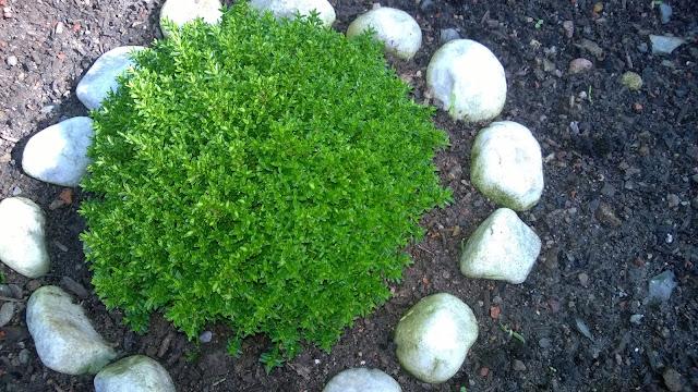 Hebe Green Globe