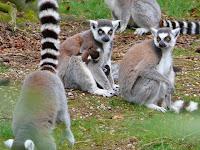 Cersa zoo Lisieux