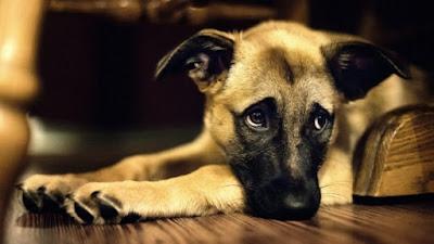 Зареєстровані собаки отримають жетони