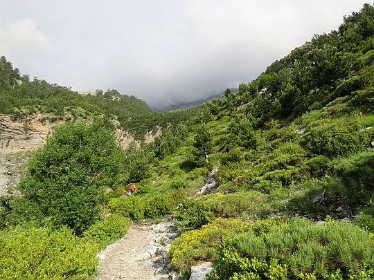 Tereny zielone w górnych partiach doliny.