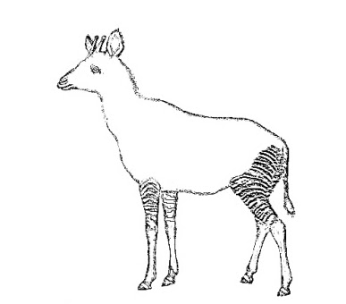 Coloring Pages Zoo Deer