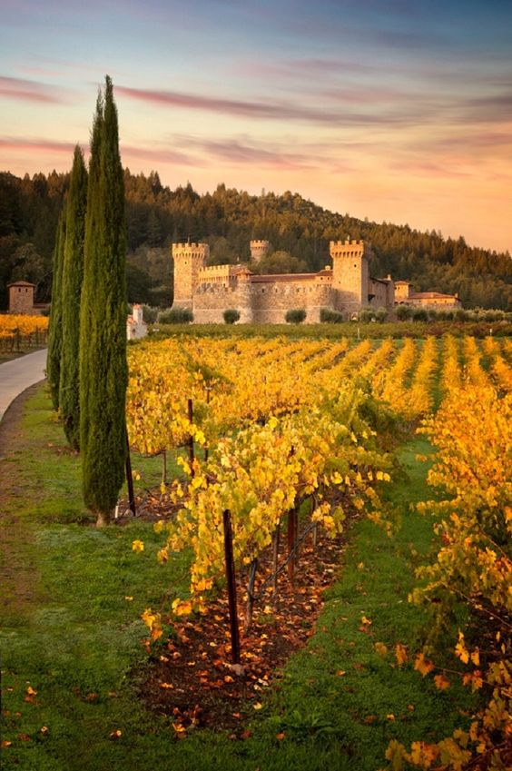 Napa Valley, California, USA