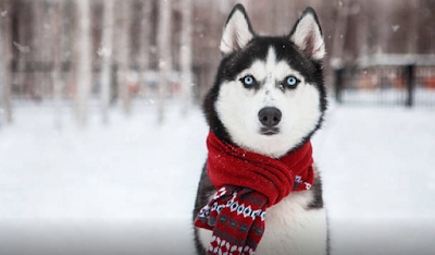dog wearing scarf in the snow