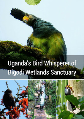 Uganda's Bird-Whisperer of Bigodi Wetlands Sanctuary