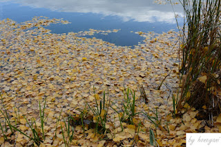 A Photo a Week Challenge: Leaves - Blätter am See auf der Wasseroberfläche