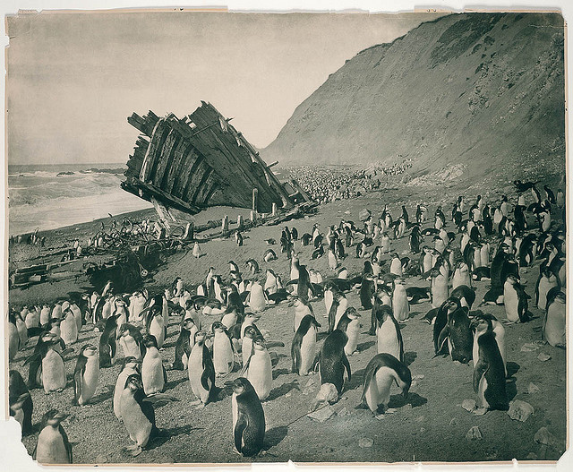 "Wreck of the ""Gratitude"", Macquarie Island, 1911. Notes: First Australasian Antarctic Expedition, 1911-1914. From the collections of the Mitchell Library, State Library of New South Wales"