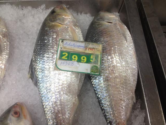 Hilsa fish price