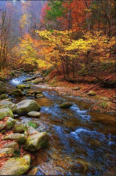 Pemandangan musim gugur di sungai