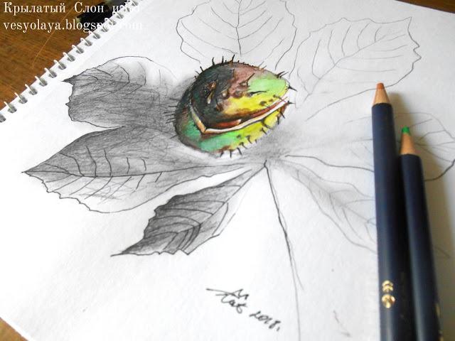 chestnut art, drawing