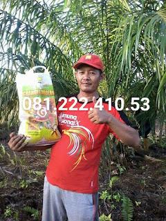 harga pupuk kelapa sawit
