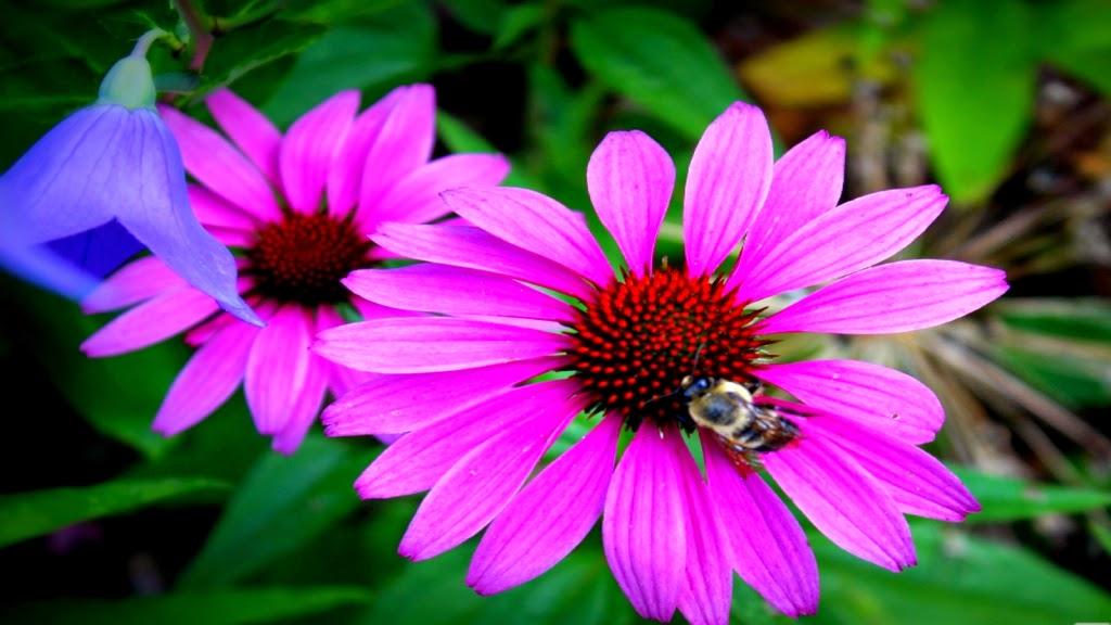 10 Gambar Bunga Cantik dan Indah Gambar Top 10