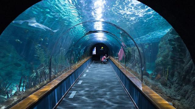 damazprowincji.blogspot.com, stolica, akwarium, gran canaria, wyspy kanaryjskie