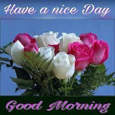 good morning msg,good morning hd,good morning flowers,good morning gif love,good morning wishes,good morning love,good morning hindi,good morning pic