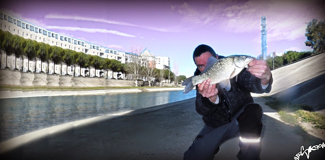 streetfishing carassin