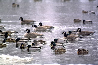 Michigan DNR biologists discuss effects of milder winter on wildlife